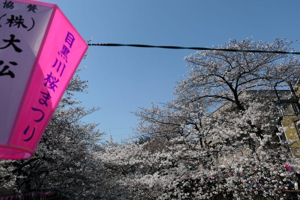 東京都内屈指のお花見の名所『目黒川』。    食べて飲んで楽しい・桜を見て楽しい。    先日昼・夜とお花見へ行ってきたので分かりやすくまとめてみました!
