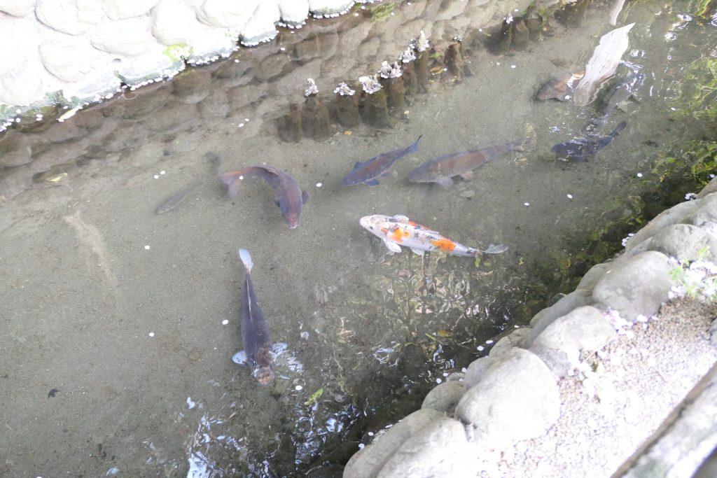 沼部駅の近くは「桜坂」だけじゃないんです!    魅力いっぱいの「六郷用水の跡」をたくさんの写真付きでレビューしたいと思います。
