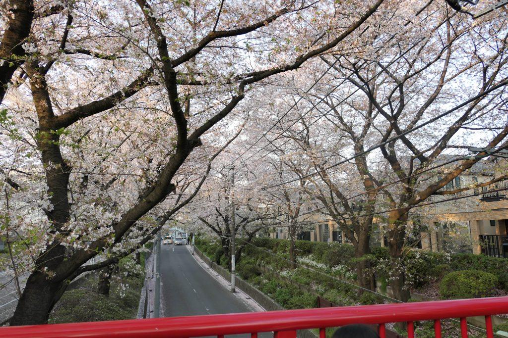 多摩川駅目の前に位置する自然あふれる「田園調布せせらぎ公園」へ行ってきました。    子供と一緒に家族でピクニックも気軽に行くことができますよ。