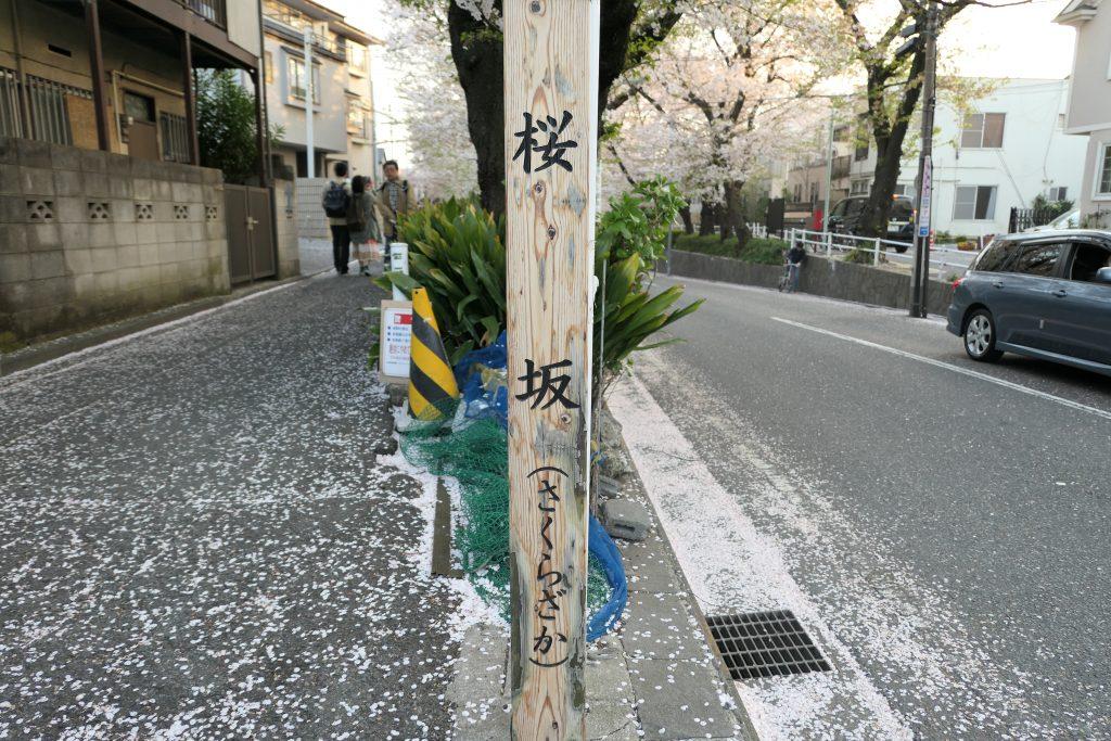 福山雅治さんの大ヒット曲「桜坂」はみなさんご存知ですよね?    今回はこの曲の舞台になり一躍有名になった、東急東横線「沼部駅」近くの「桜坂」へお花見に行ってきましたのでまとめました!