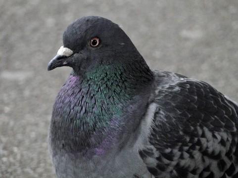平和の象徴と言われる「鳩」ですが、全国各地に生息し、また同時に多くの方がその被害に悩まされています。    大事な物件に鳥害を住みつかせないためにも、しっかりと対策をしましょう。