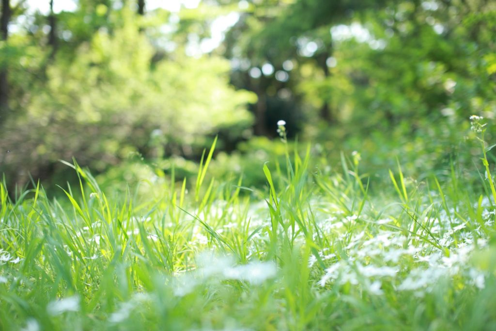 暑い日特に不動産投資や賃貸経営で困らすのが、外の「雑草」です。    今回はアパート・マンション経営等の物件敷地内の除草のお話です。